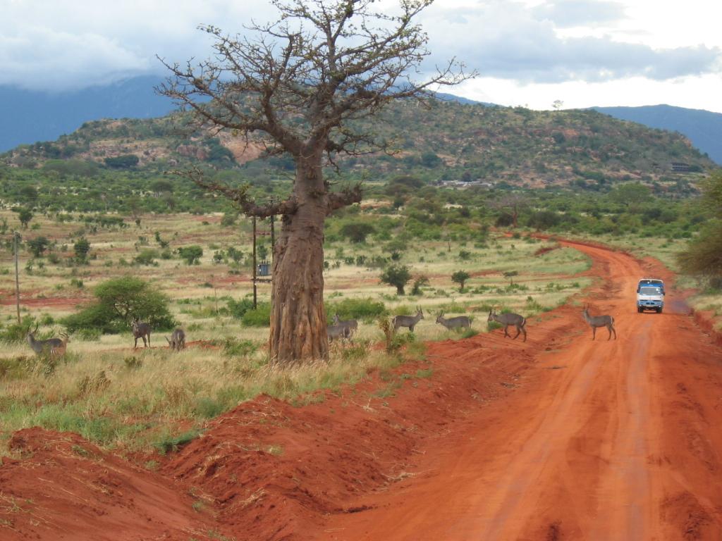 Сафари в Кении. Автор: Adorenomis. Фото:  www.flickr.com