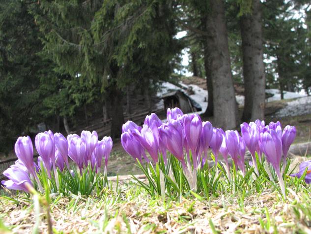 Фото: dragobrat-go.com