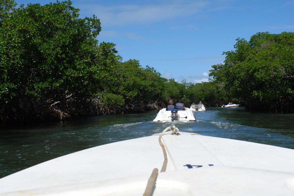 Экскурсия по мангровым зарослям. Фото:  Тонкости туризма