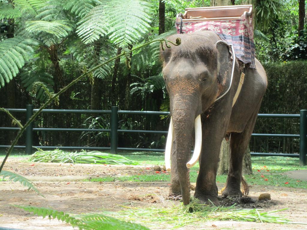 Сафари-слон. Автор: Annie Mole. Фото:  www.flickr.com