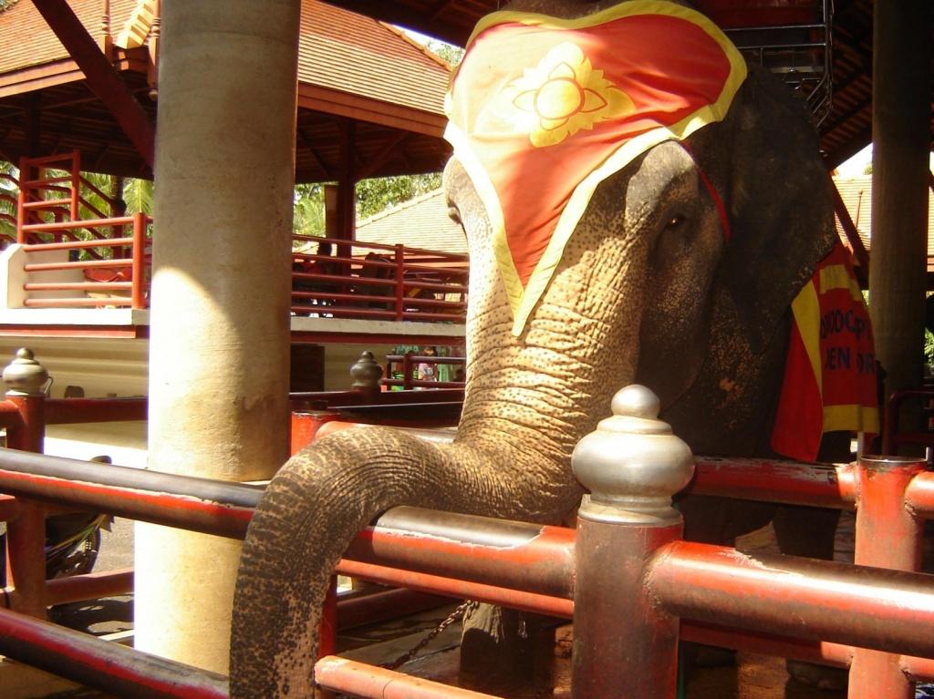 Шоу слонов. Автор: Стахнева Яна