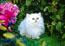 Пушистый белый синеглазый котик в цветущем парке.