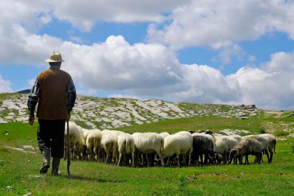 Lesson 54 The True Shepherd and His Sheep John 1016