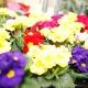 Цветочный центр Сибири