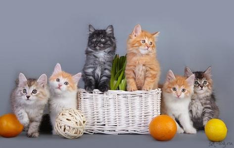 Весна без кошек — не весна!