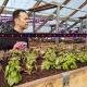 Сибиряк бросил юридический бизнес, чтобы выращивать зелень посреди сугробов в –40 (фото)