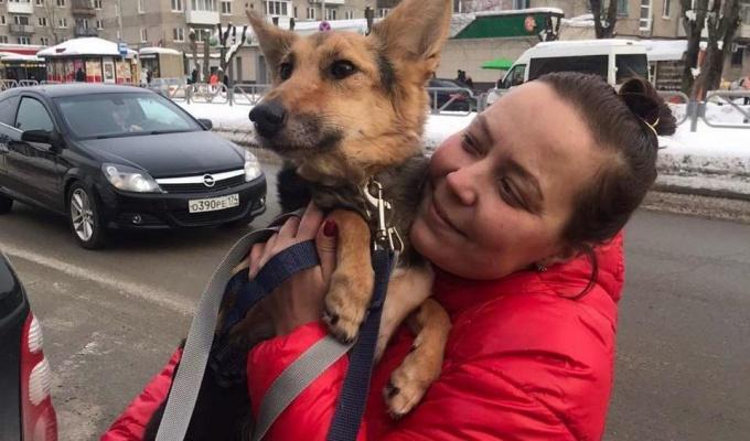 В Нижнем Новгороде спасли от эвтаназии собаку, которую мучили хозяева