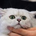 Новосибирские депутаты дополнили закон о тишине правкой, которая касается кошек, собак и их владельцев