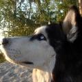 Хозяйка Джека уверяет, что её пес —очень дружелюбный. Однако он чуть не пострадал от рук неизвестного мужчины