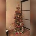 Ёлка-долгожитель стоит в квартире сибирячки с 31 декабря 2016 года