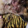 На теле собаки нашли следы от дроби