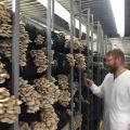Смешные грибочки