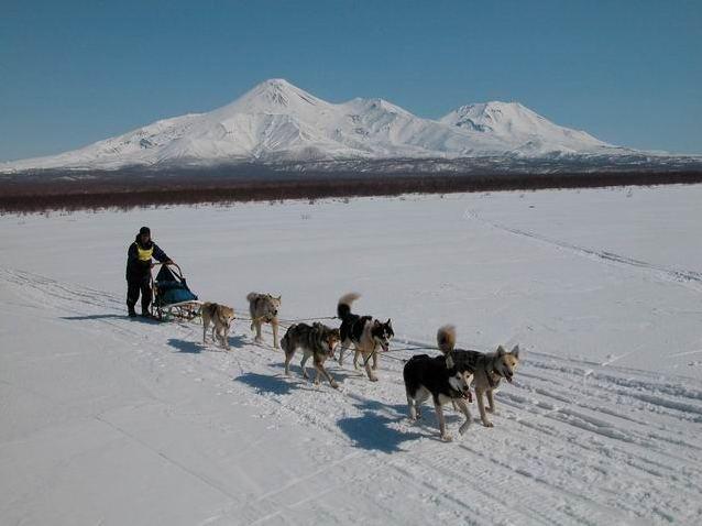 Гонки на собачьих упряжках. Фото: www.rusotpusk.ining.ru