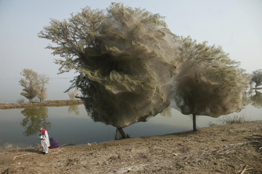Автор: DFID. Фото:  www.flickr.com