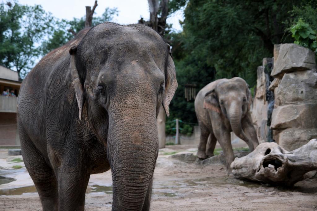Автор: lrumiha. Фото:  www.flickr.com