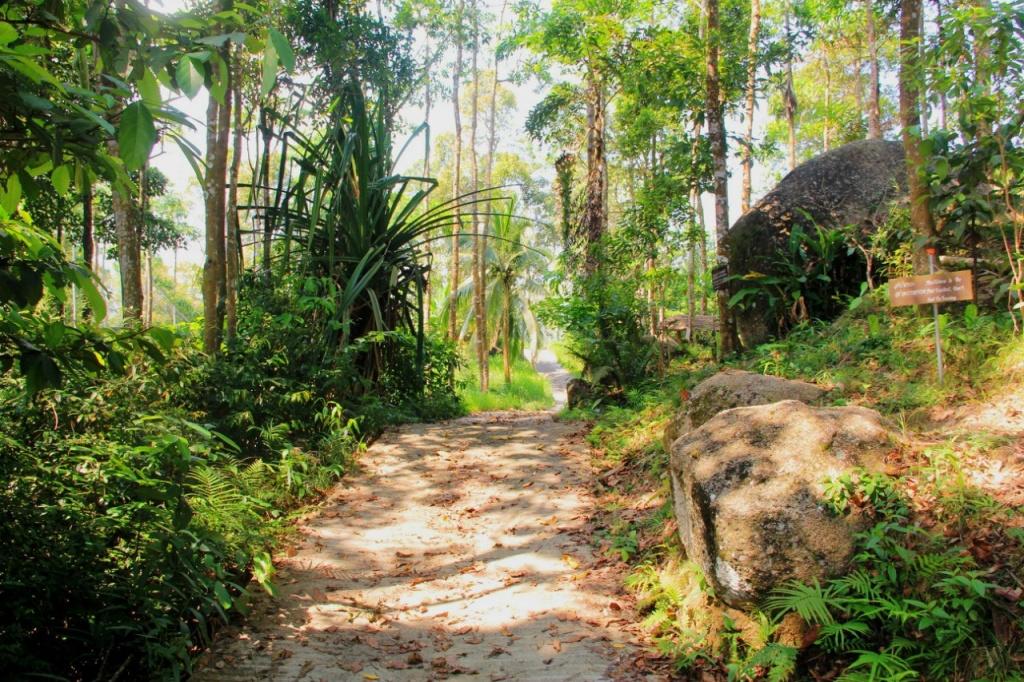 Ко Самуи, джунгли. Автор: Роман Жайворон