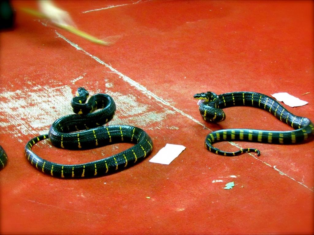 Автор: Jeff Gunn. Фото:  www.flickr.com