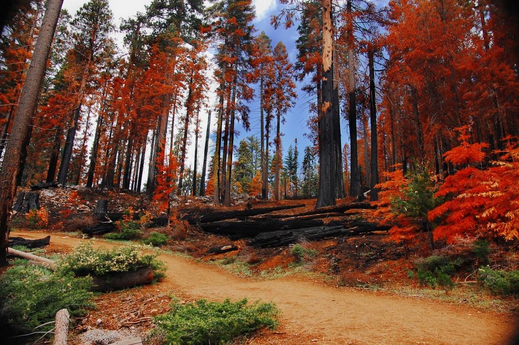 Автор: vl8189. Фото:  www.flickr.com