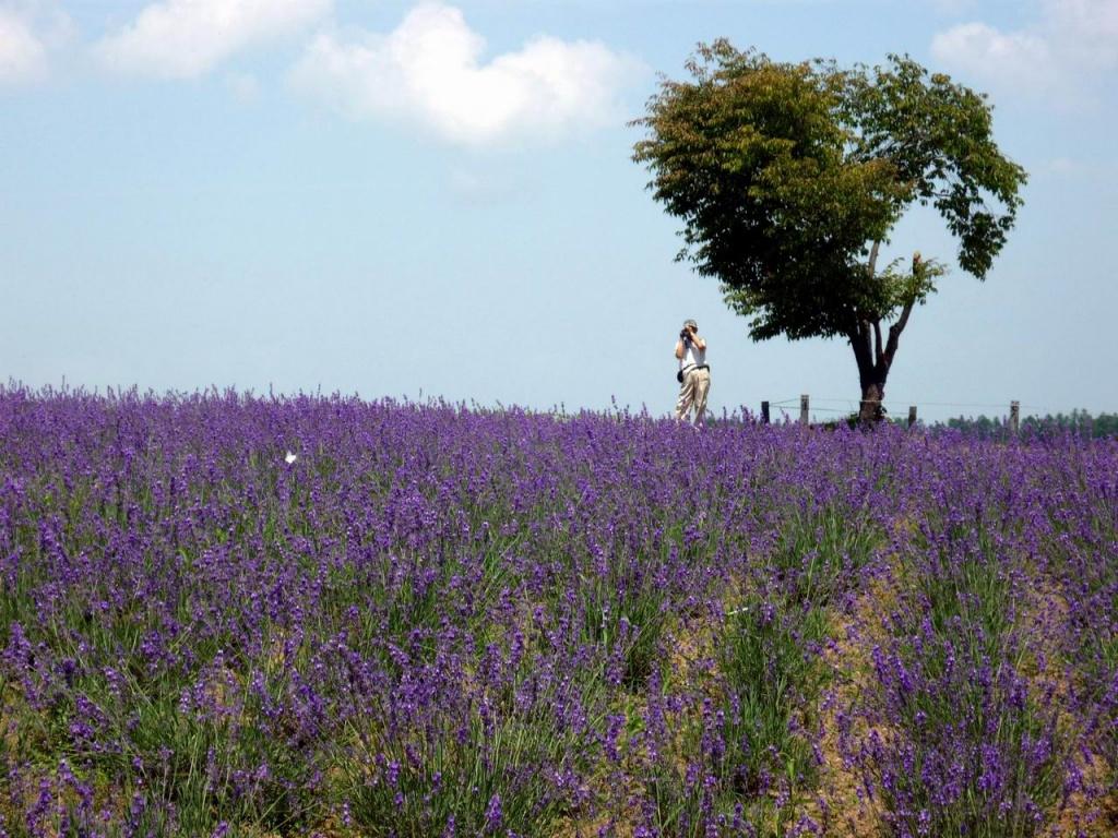 Автор: jinym1st. Фото:  www.flickr.com