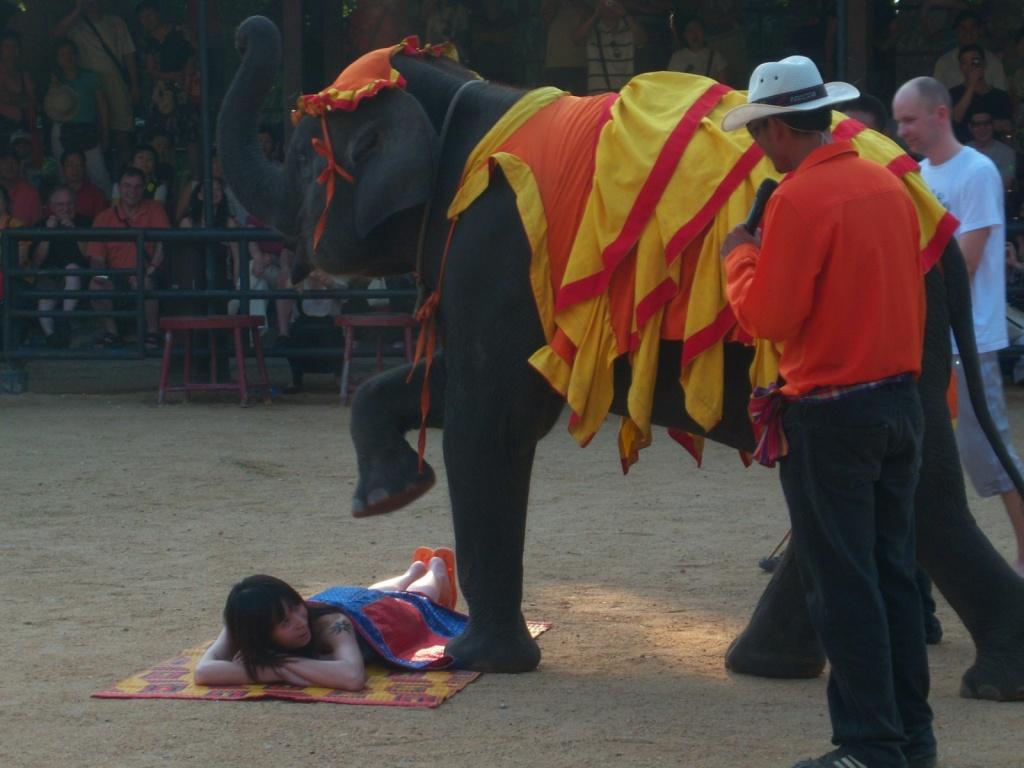 Автор: Rohit Thakur. Фото:  www.flickr.com