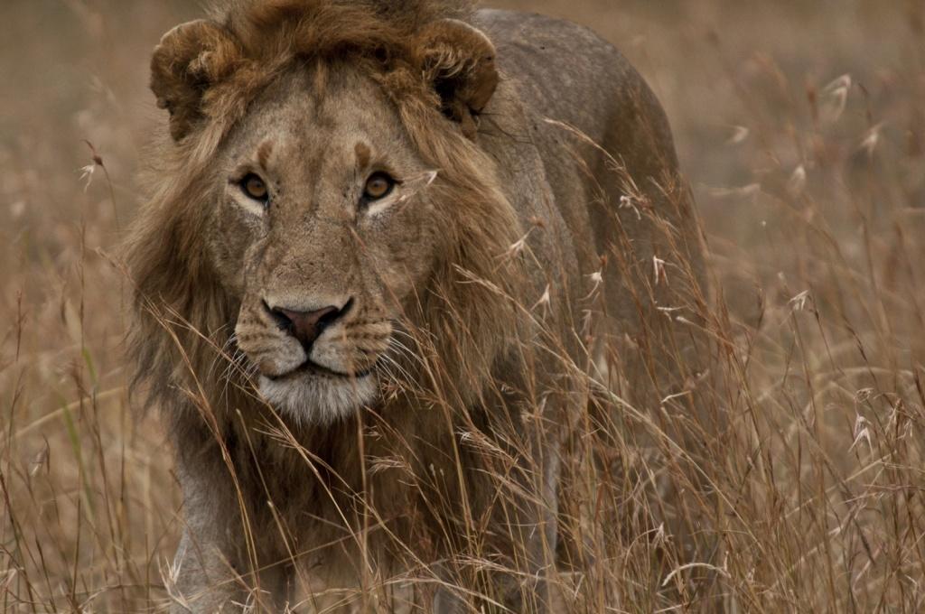 Танзания. Автор: puliarf. Фото:  www.flickr.com