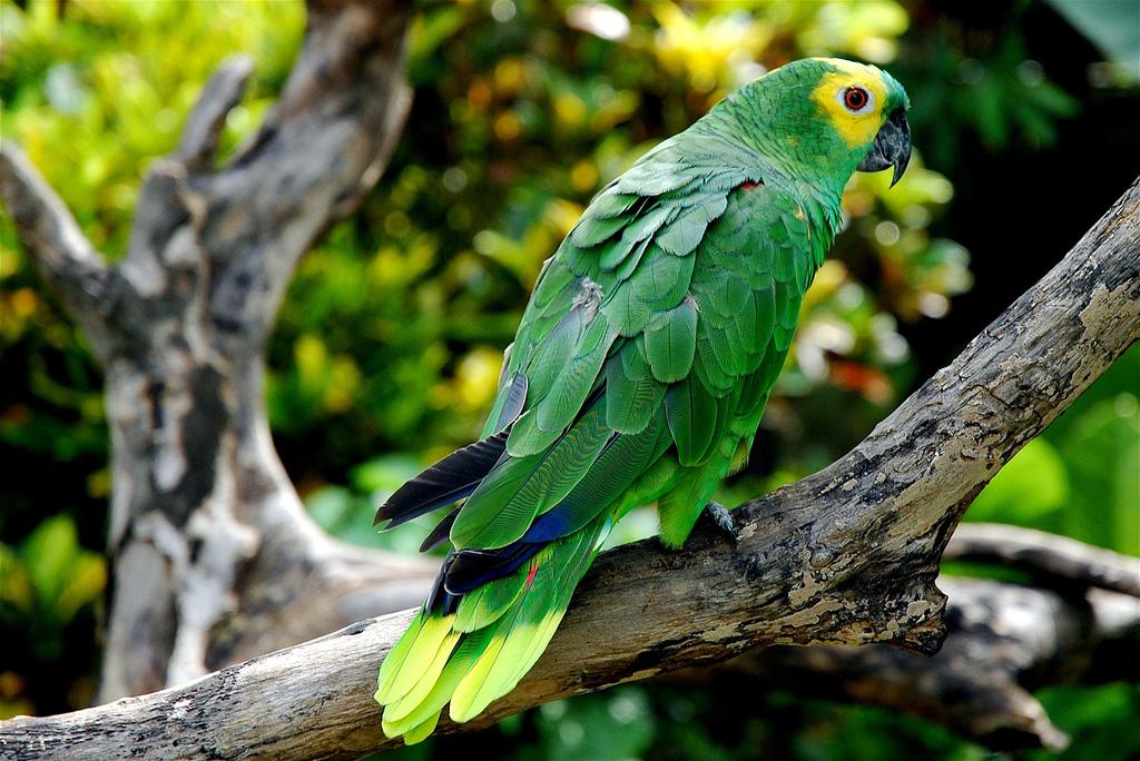 Автор: m@teo. Фото:  www.flickr.com