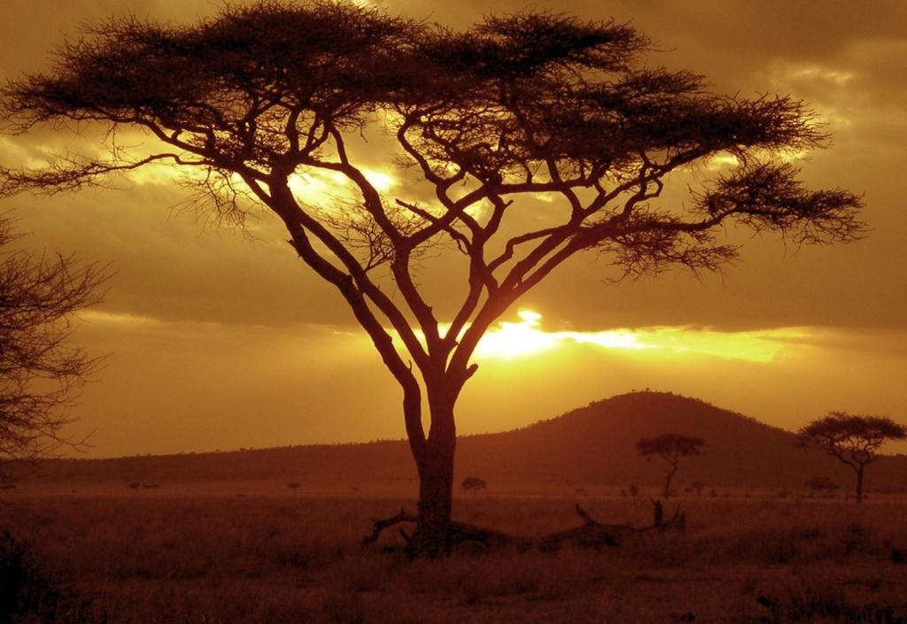 Танзания. Автор: NeilsPhotography. Фото:  www.flickr.com