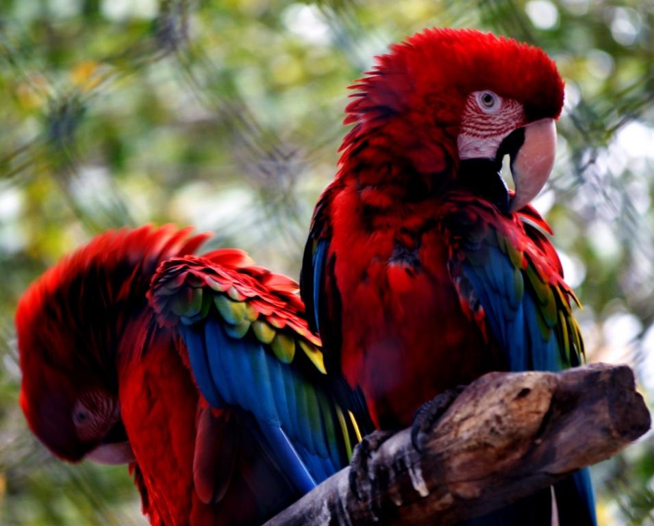 Автор: Digo_Souza. Фото:  www.flickr.com