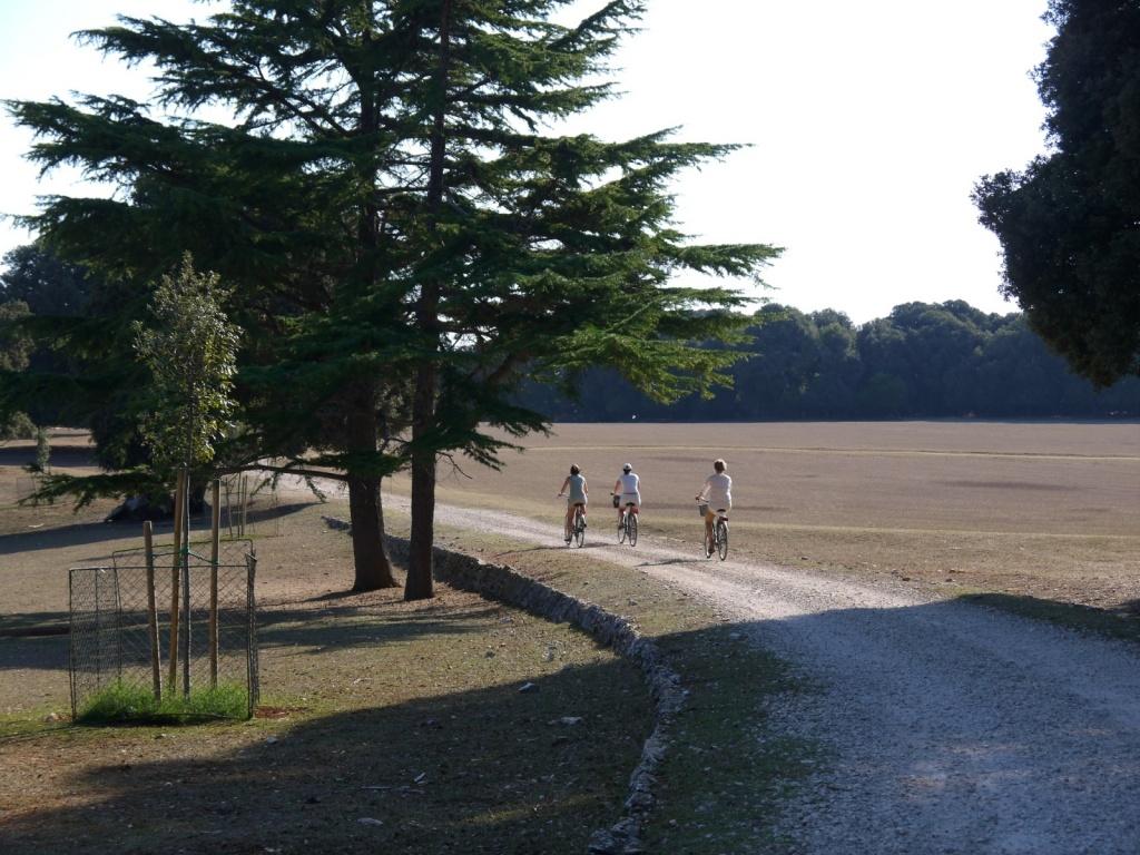 Велопрогулка по острову. Автор: wiccahwang. Фото:  www.flickr.com