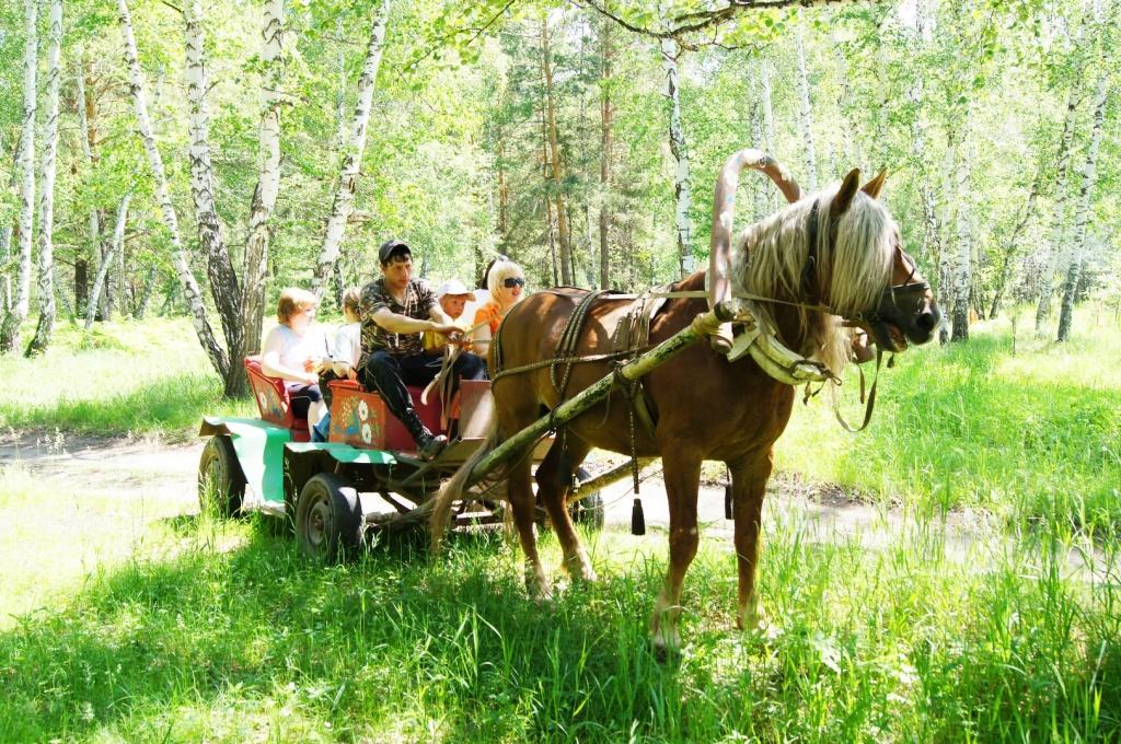 Катание на конной повозке