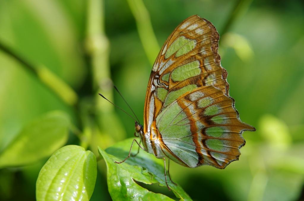 Автор: Doundounba. Фото:  www.flickr.com