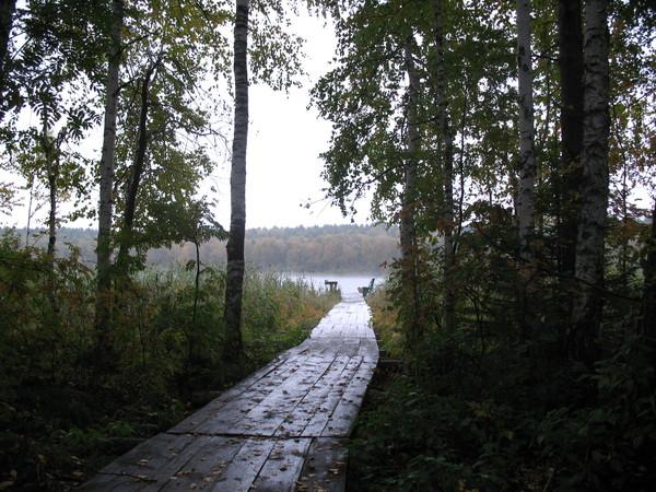 Фазенда, лес. www.linevo-ozero.ru