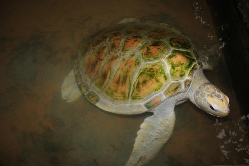 Альбинос. Фото:  shrilankablog.ru