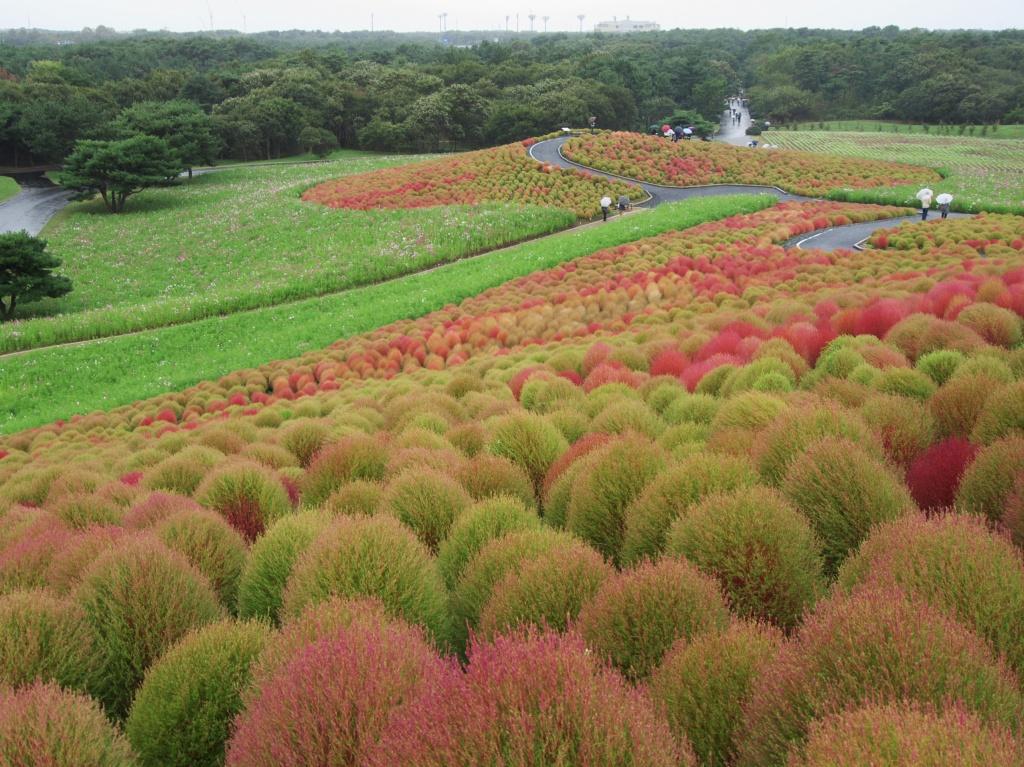 Автор: dacheket. Фото:  www.flickr.com