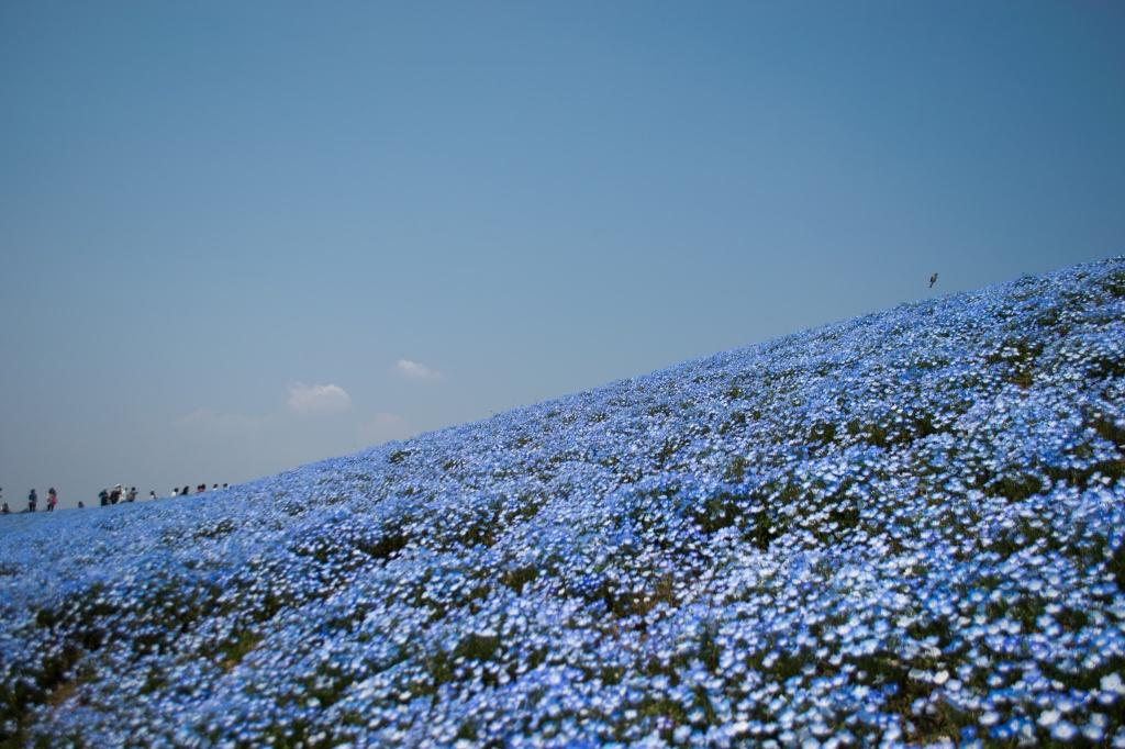 Автор: _temaki_. Фото:  www.flickr.com