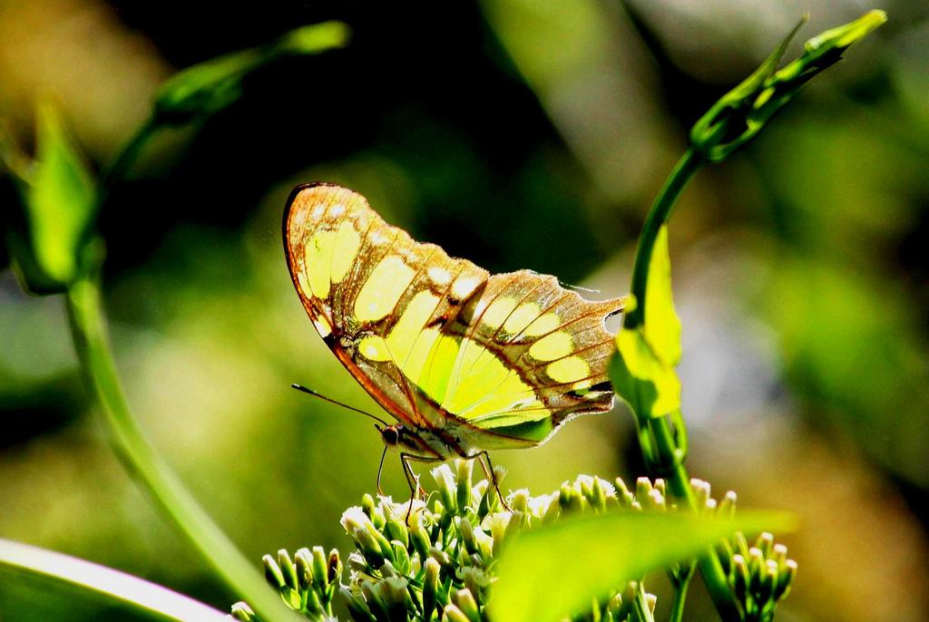 Автор: dany13. Фото:  www.flickr.com