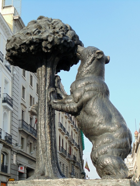 Медведица и земляничное дерево. Автор: M.Peinado. Фото:  www.flickr.com