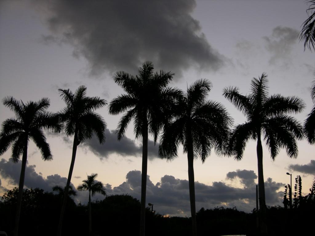 Кубинский вечер. Фото:  Тонкости туризма