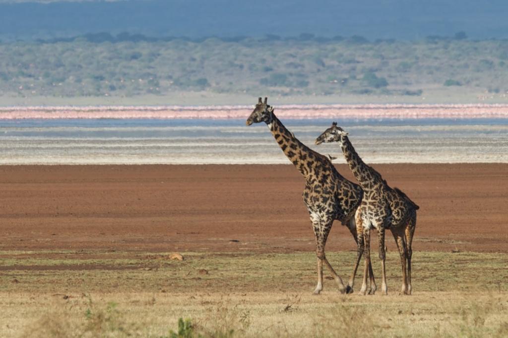 Танзания. Автор: Larry Johnson. Фото:  www.flickr.com
