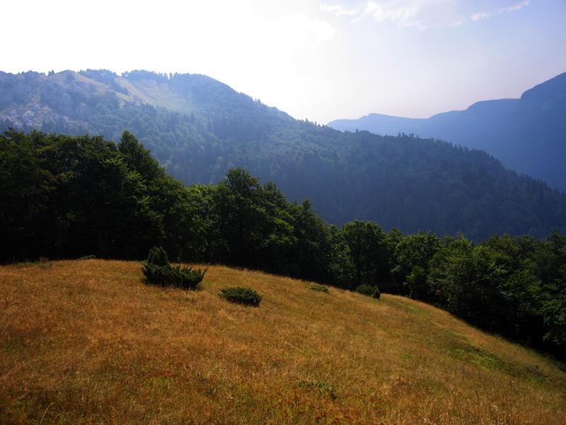 Автор: Snežana Trifunović. Фото:  commons.wikimedia.org