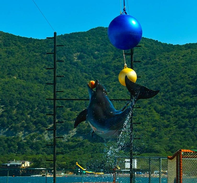 Дельфинарий в Анапе. Автор: Фото:  wikimedia.org