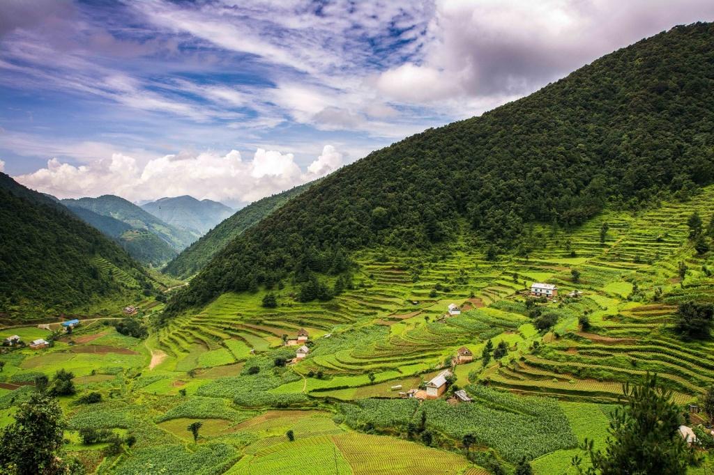 Рисовые поля. Непал. Автор: Sharada Prasad. Фото:  www.flickr.com