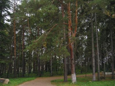 Территория санатория. Фото: sanang.ru