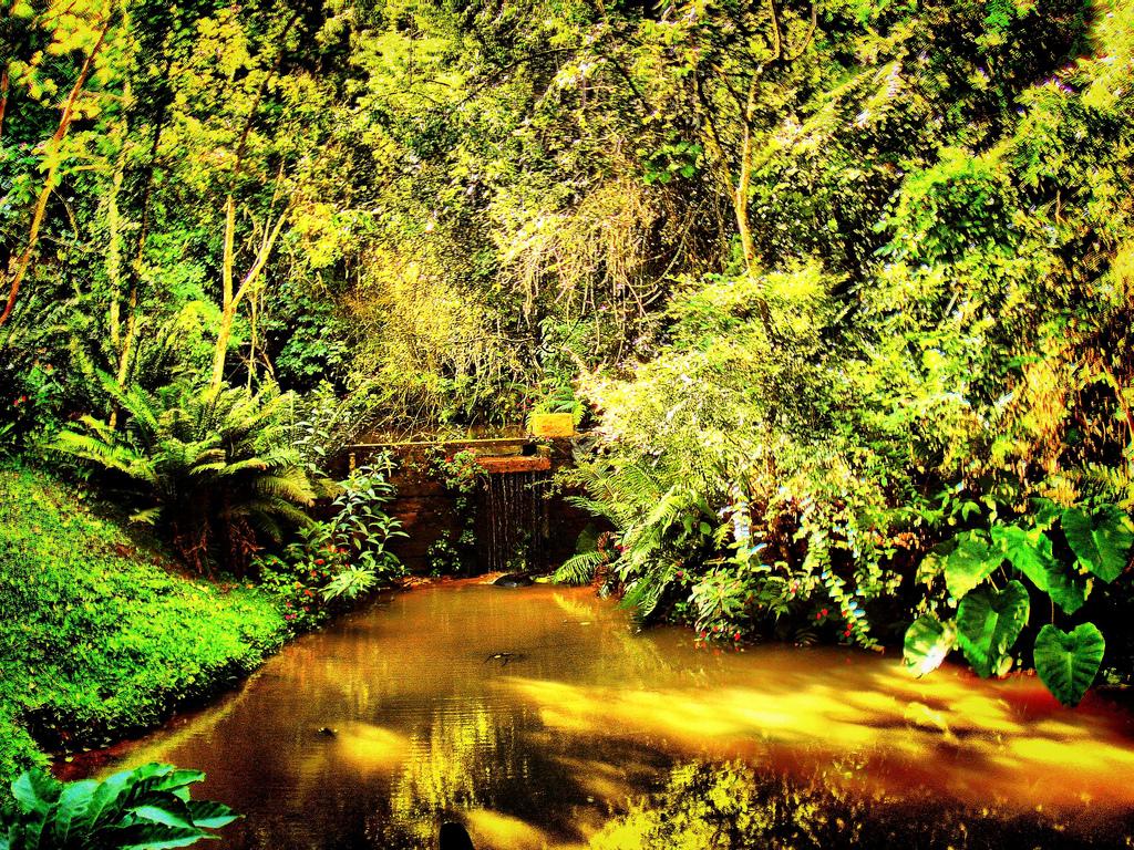 Автор: Javã Társis. Фото:  www.flickr.com
