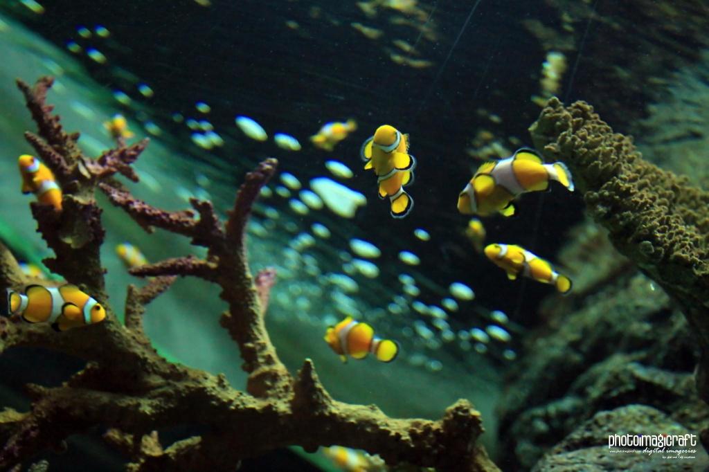 Автор: GianCayetano. Фото:  www.flickr.com