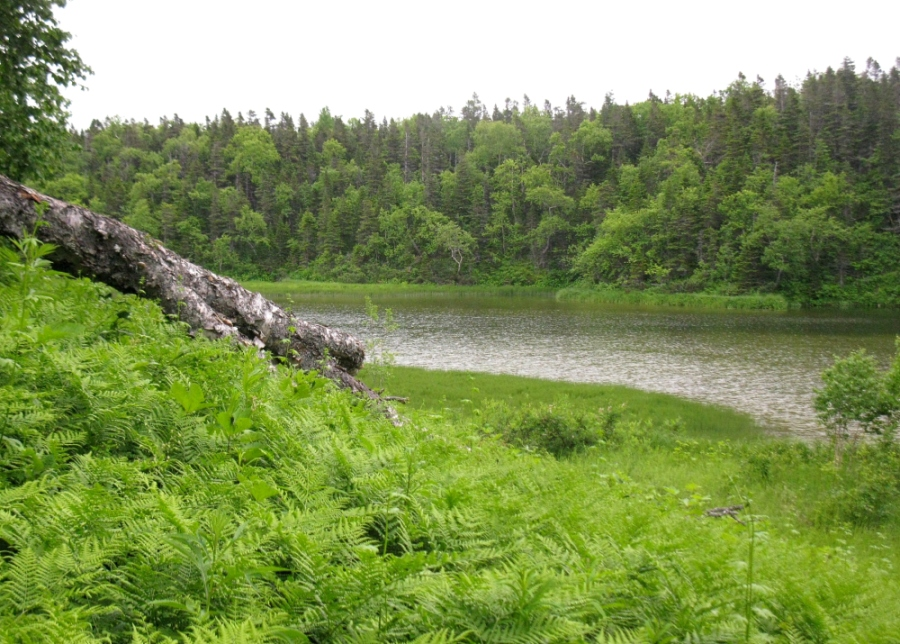 Вид на стену леса со стороны оз. Пихтовое.  Фото: Хакимулина Татьяна Вакифовна   www.plantarium.ru