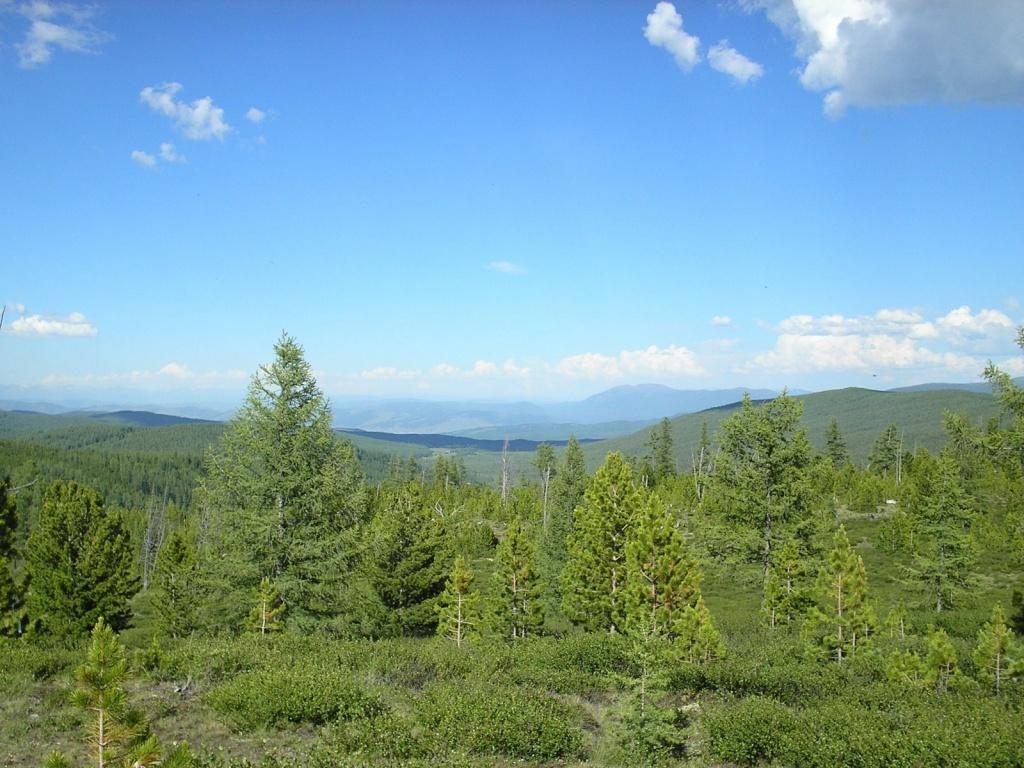 Вид с Улаганского перевала. Автор: Obakeneko. Фото:  www.flickr.com