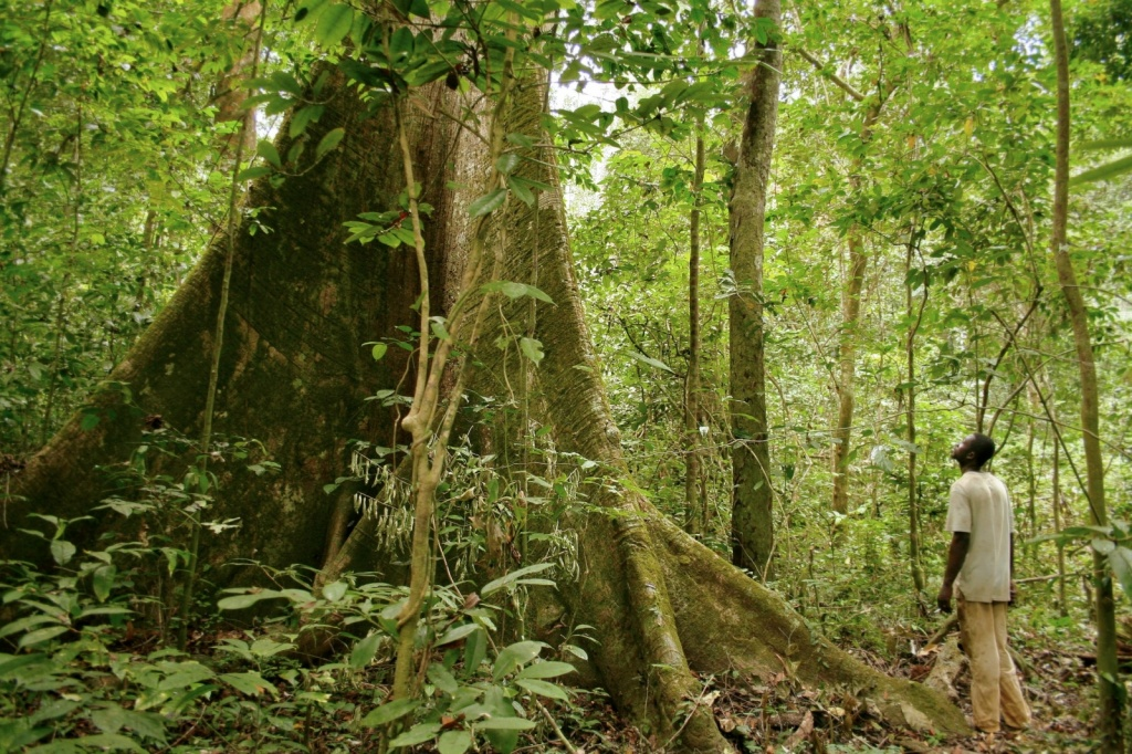 Дождевой лес. Автор Axel Rouvin. Фото:  www.flickr.com