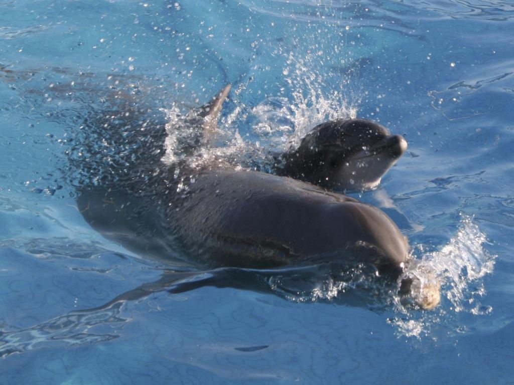 Дельфинарий Римини. Фото с сайта  tonkosti.ru