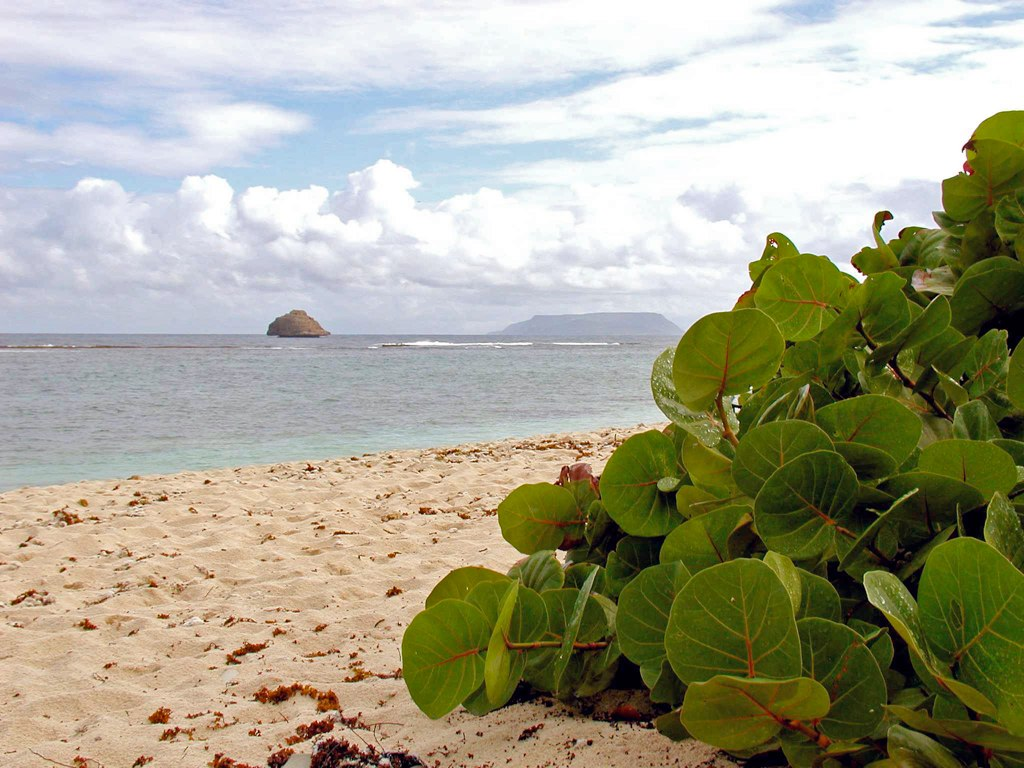 Гваделупа. Автор: sybarite48. Фото:  www.flickr.com